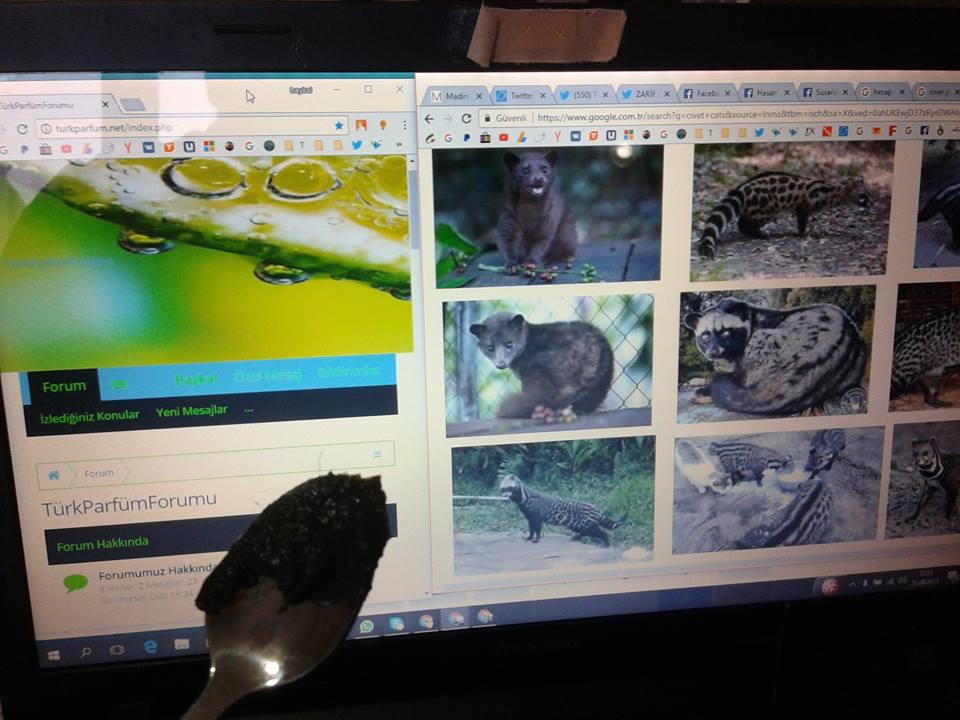 civet miski kıl içinde karanlık çekim arkada turkparfum net sitesi web site civet musk paste f k.jpg