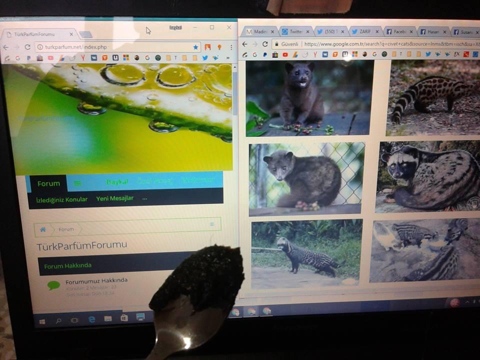 civet miski kıl içinde karanlık çekim arkada turkparfum net sitesi web site civet musk paste.jpg