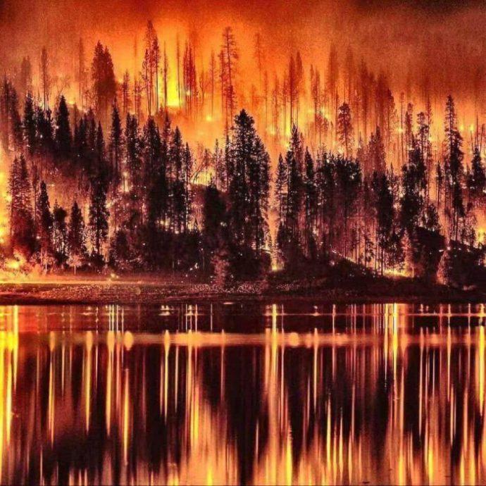 gold-black-brown_fire_lava_molten_trees-forest-flames-e1514074376443.jpg