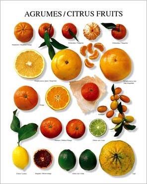 img_Citrus-Fruit_Atelier-Nouvelles-Images_ref_110.001423.00_mode_zoom.jpg