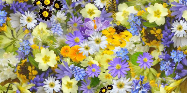 Mavi Sarı renklerde çiçekler toplu Adsız-tasarım-11-3.png
