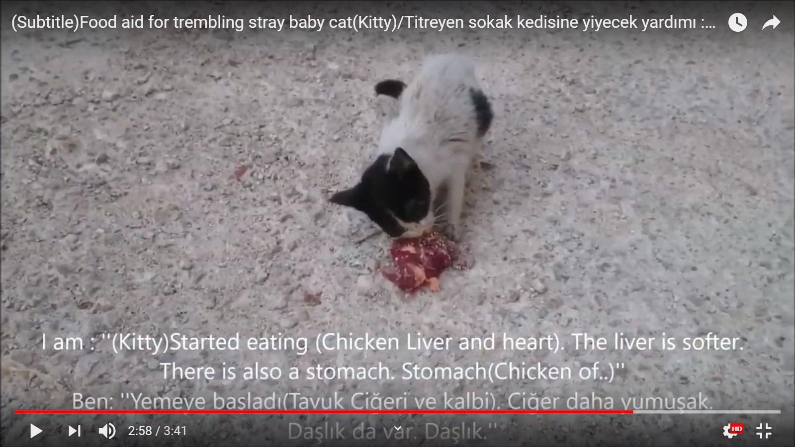 Zavallı titreyen yavru sokak kedisine yardım yemek vermek tavuk ciğeri kalbi daşlık  Scre...jpg
